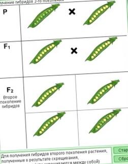 bmv-x3-alljur-tri-kresta_1.jpg