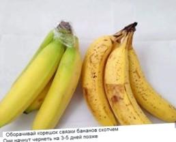peshehodov-nuzhno-obozhat_1.jpg